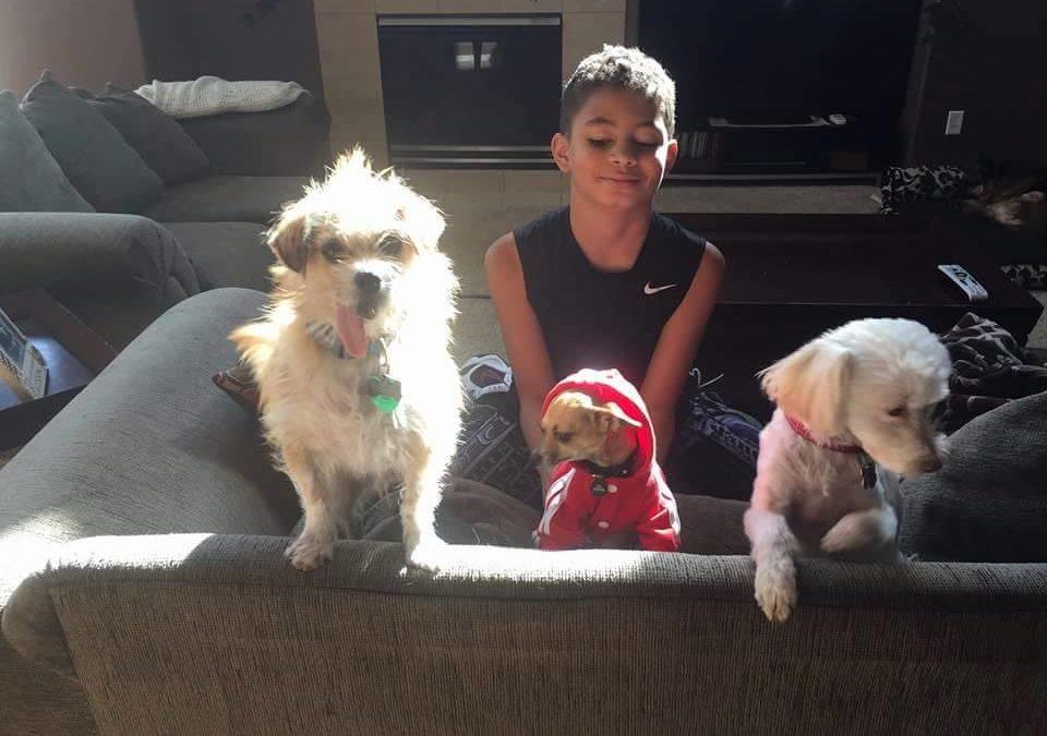 Tijuana dogs home